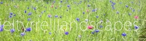 meadow-background